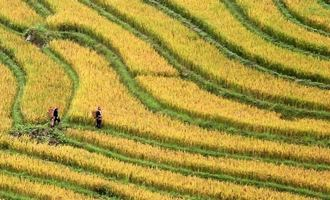 Colors of the North Vietnam